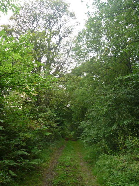 Rural East Lothian : A Rough Track Near Linplum And Linkylea