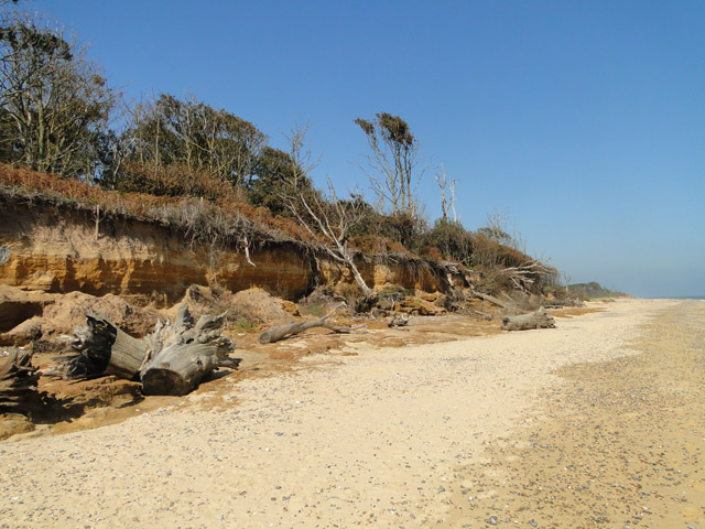 Cliffs and fallen trees on the beach near Covehithe Broad