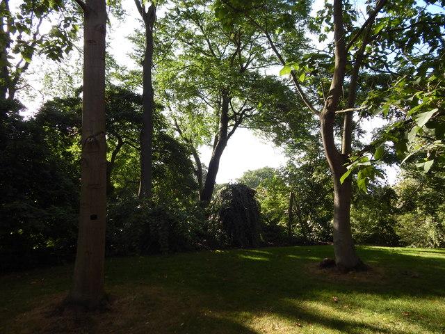 Trees in Kew Gardens