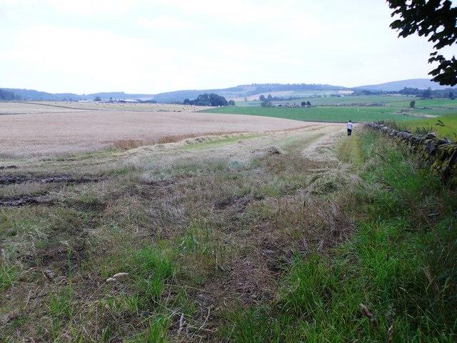 Harvesting the barley (2014)