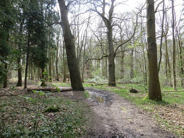 Dudmaston Woods