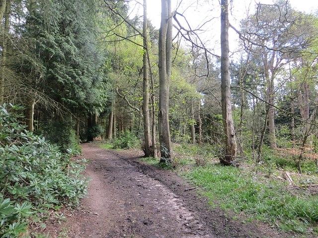 Path, Comer Wood