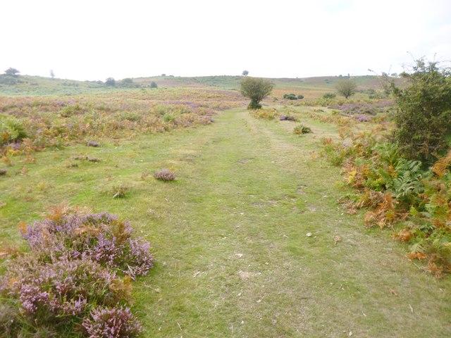 Cunninger Bottom, track