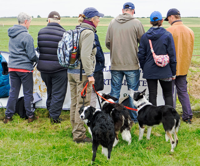 Competitors at the World Sheep Dog Trials 2014