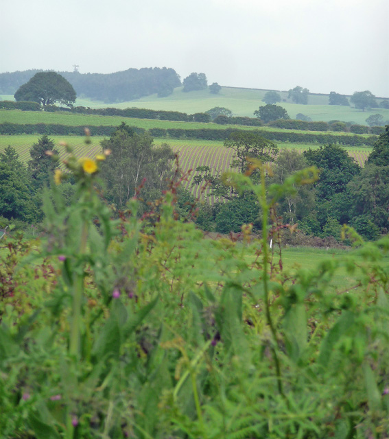 Farmland near Calverton