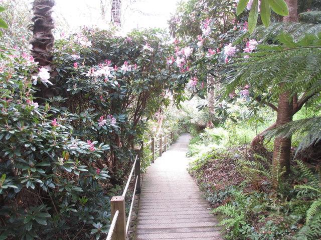 Broadwalk in the jungle