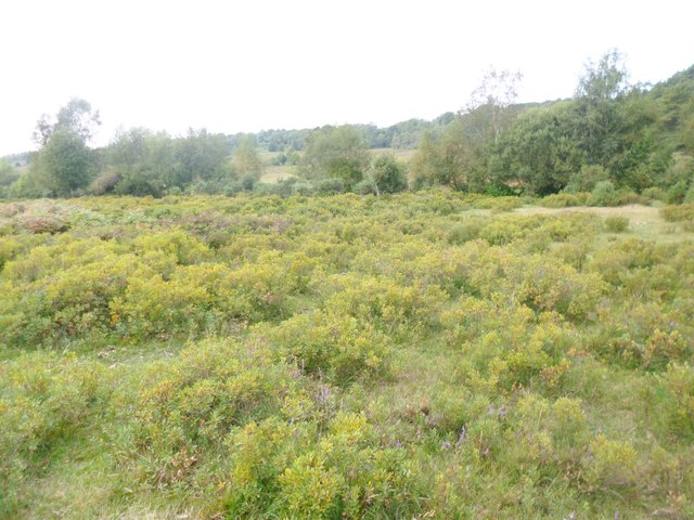Millersford Bottom, humid heathland