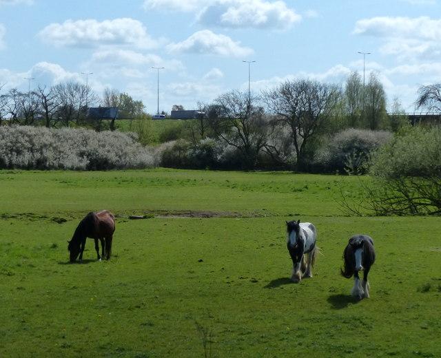 Horses near Rothley Brook