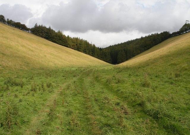 Wayrham Dale plantation