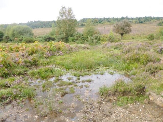 Millersford Bottom, drain