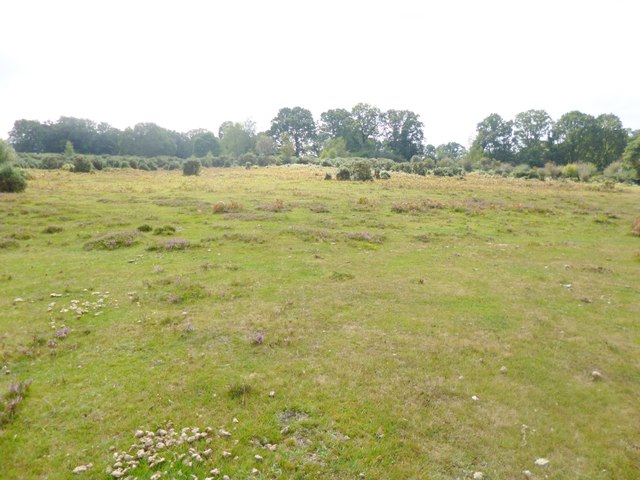 Millersford Bottom, grassland