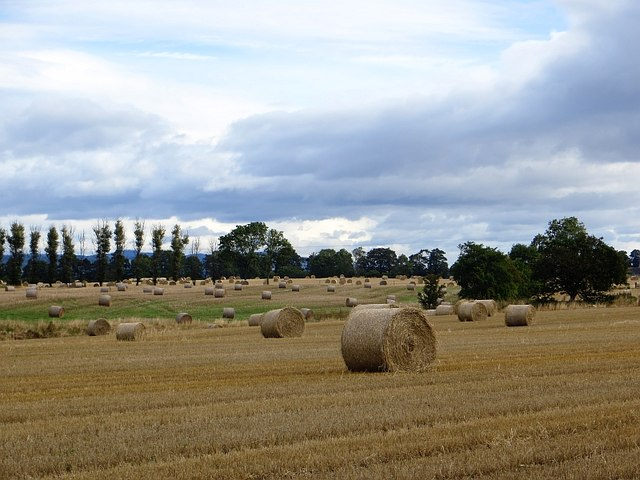 Round bales near St Madoes