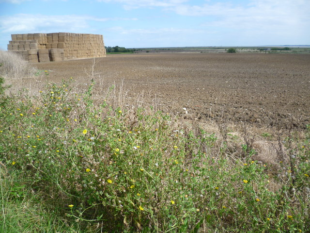 View from track near Elliotts Farm