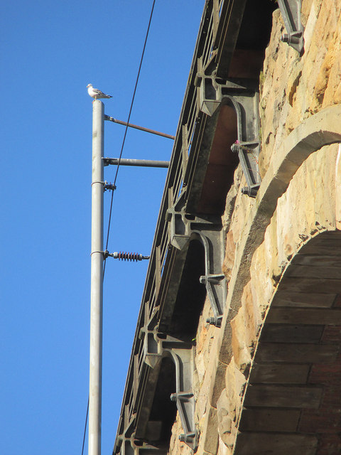 Durham: viaduct detail with gull