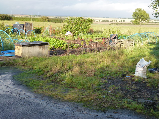 Allotments in Warboys, Cambridgeshire