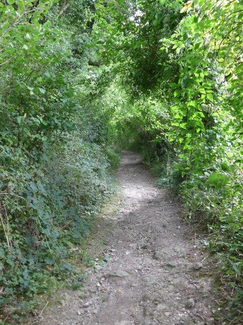 South Downs Way, Exton to Buriton (121)