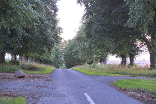 Avenue of lime trees, Linton