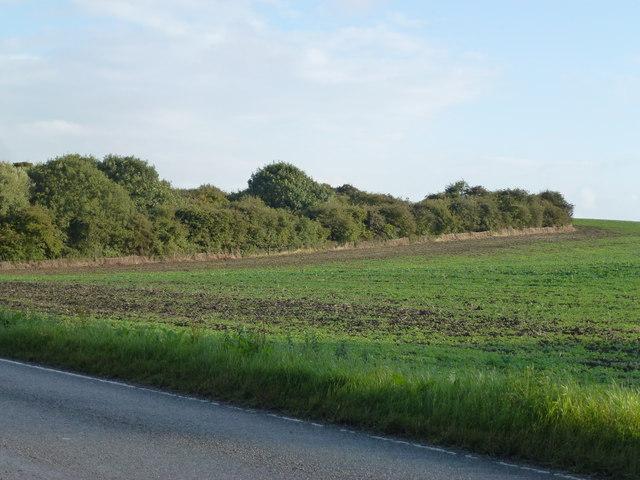Copse an farmland near Avenue Farm