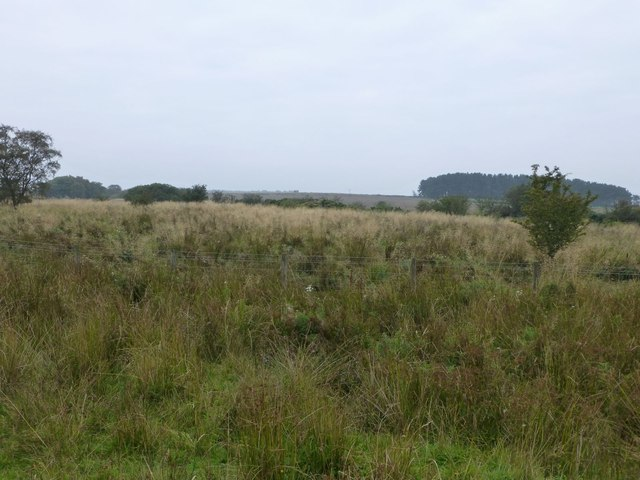 Longhorsley Moor