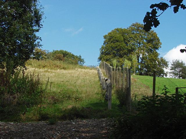 Fields above Chinthurst Lane