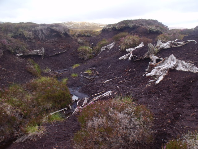 Remains of trees at 650m near Allt Eindart, Glenfeshie