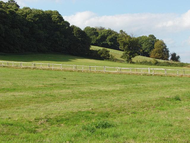 Fields below Chinthurst Hill