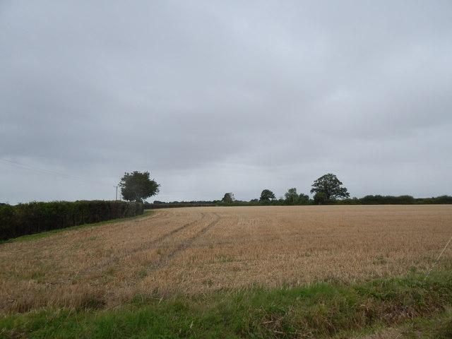 Field in Round Maple