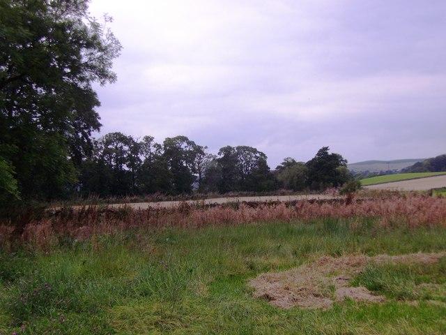 Field boundary near Waulkmill Farm