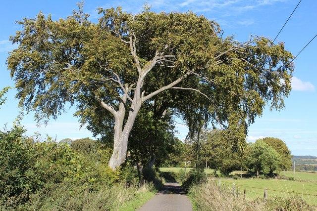 Barnshake farm road