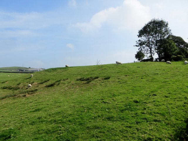 Sheep pasture off Hollowhead Lane