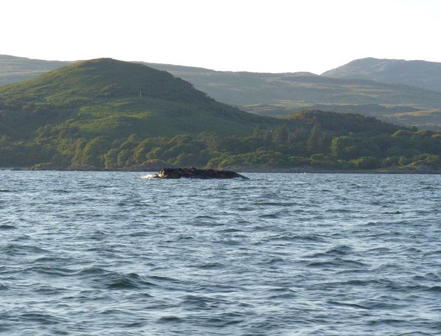 Garbh Sgeir Beag, Islay