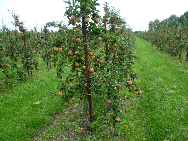 Orchards near Egerton