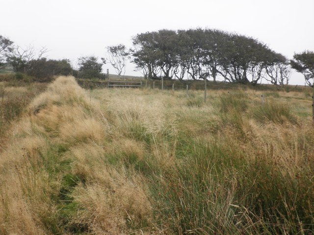 Boundary on Challacombe Common