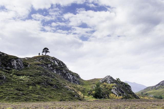 Trees atop Tom a' Mhein