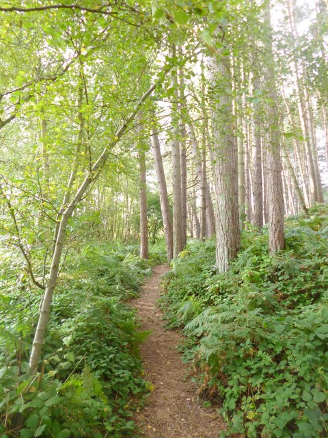Avon Heath Country Park, path