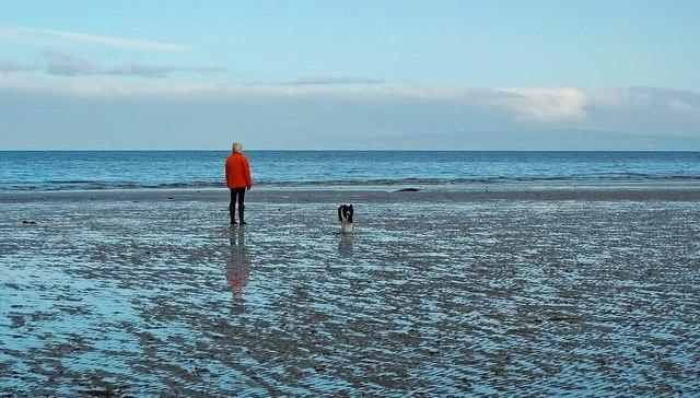 Beach Dog-Walking