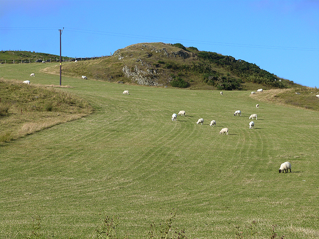 Field with sheep behind Ballinaby