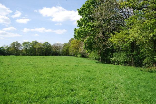 Footpath along woodland edge