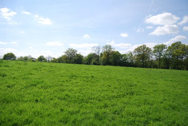 Surrey Field