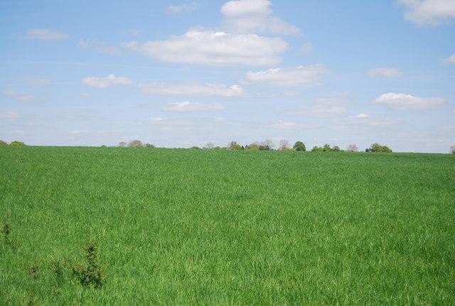 Near Holbrook Farm
