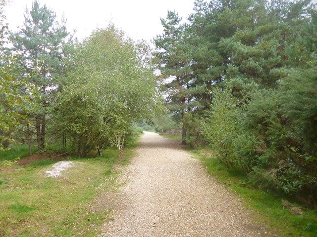 Avon Heath, path