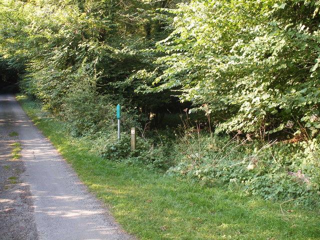 Footpath Yedmandale Woods