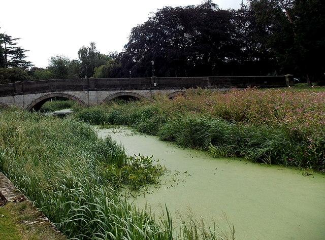 Green slime on the River Eye,  Melton Mowbray