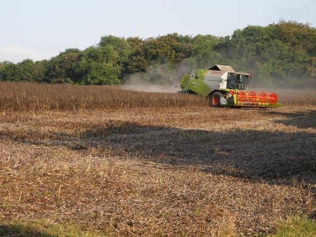Harvesting, High Yedmandale 1