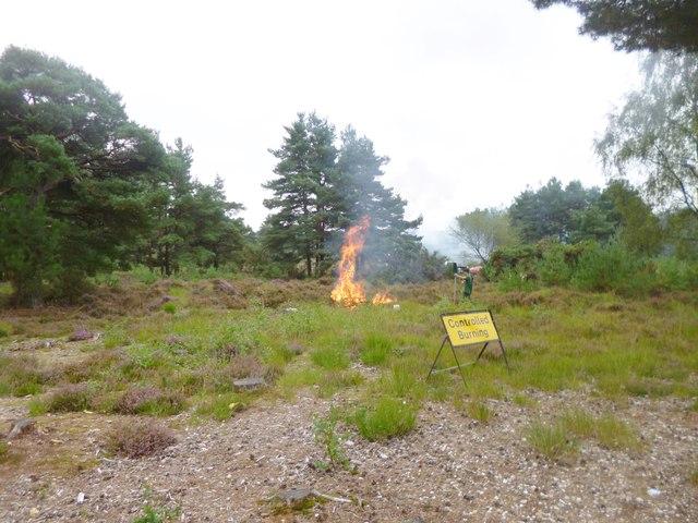 Avon Heath, controlled burning
