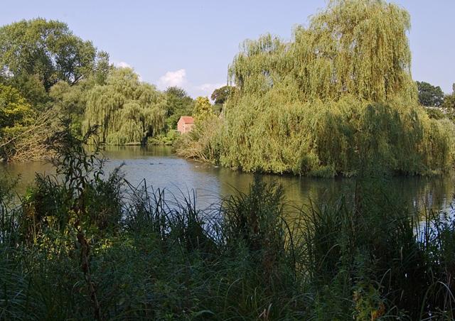 Pond at Cawkeld, E Yorks