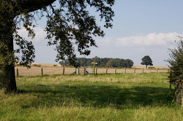 Bracken field, (E Yorks)