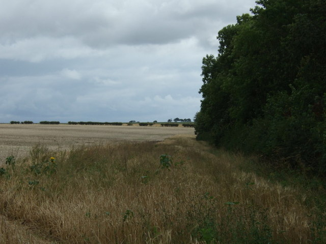 Boynton Field and North Wood