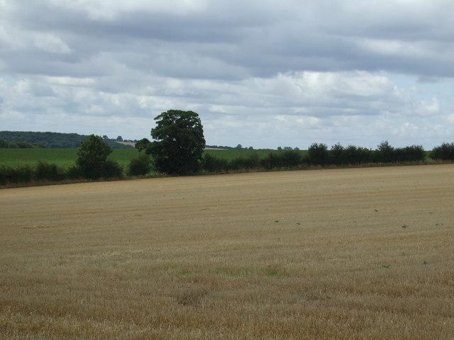 Stubble field and hedgerow, Boynton Field