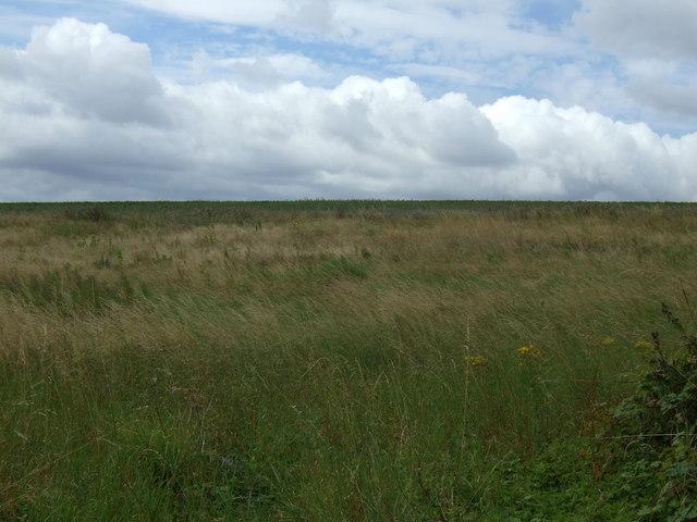 Farmland, Boynton Sheepwalk